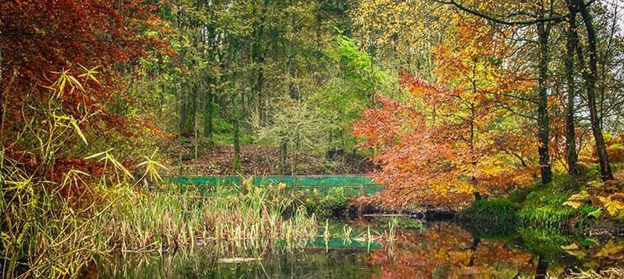 Bradford Wood